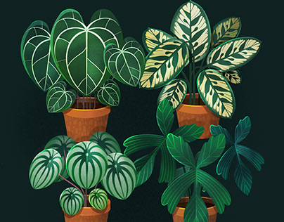 Plant Studies in Procreate