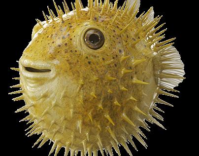 RAIFFEISEN BANK - Puffer Fish