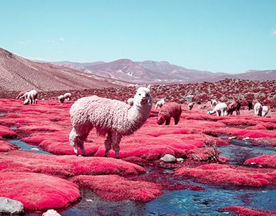 Alpaca river