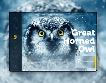 Website Projects Collection
