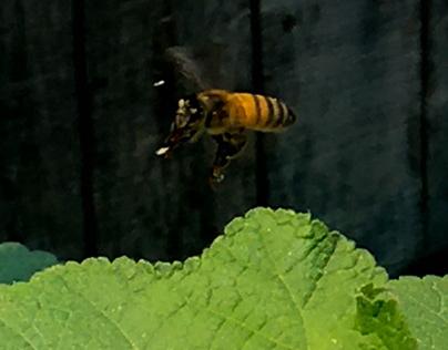 Bee Stills