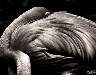 FLAMINGO & BIRD GALLERY