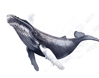 Whales of the Arctic & Antarctic