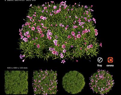 Plant Flower set 05