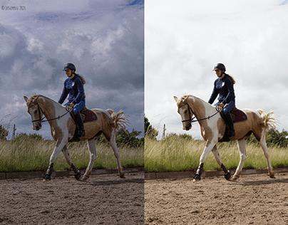 Equine Photography & Photo Editing