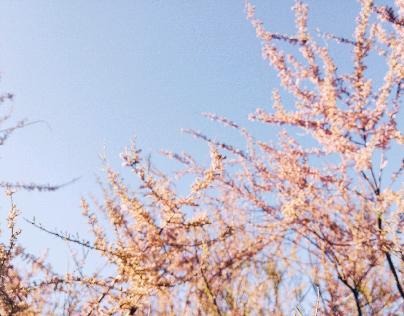 sunday afternoons I