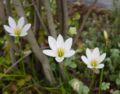 散歩で見かけた花