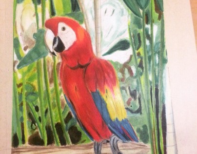 Macaw bird made with color pencils
