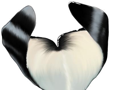 Male Orca Fluke