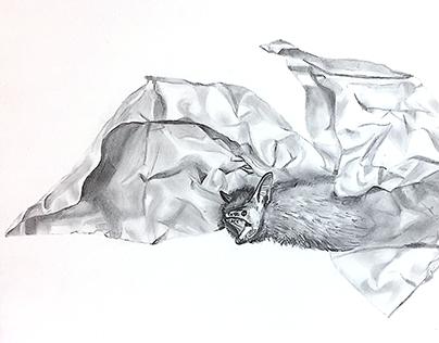 Bat Boi