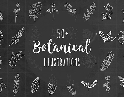 Hand-drawn botanical illustrations