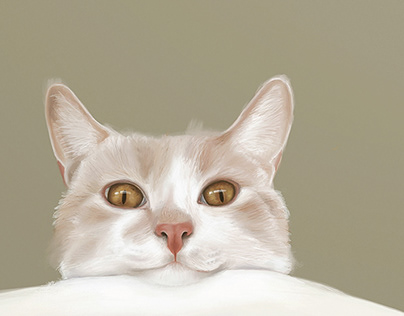 Feline visual diary