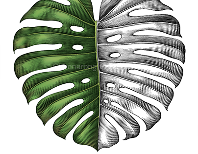 Swiss cheese leaf drawing