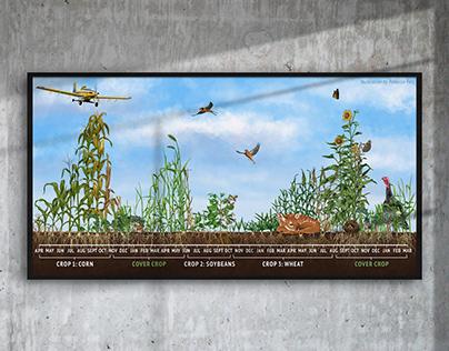 Cover Crop Timeline Illustration