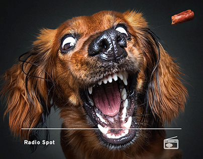 Lider Pet Food // Radio