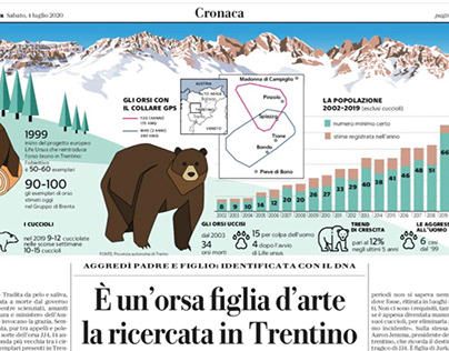 brown bear in Trentino