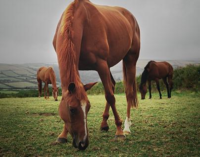 5 Common Illnesses in Horses