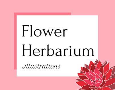 Flower Herbarium - Illustrations