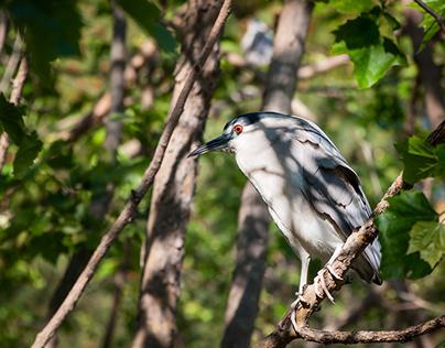 Birds of the Bay 2017