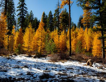 Fall Foliage and Fauna