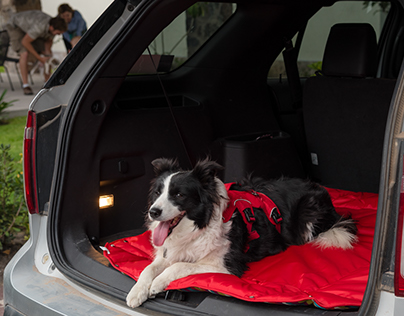 Dog Beds Photography
