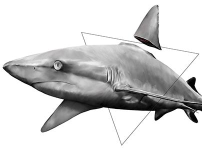 Kill the fin trade.