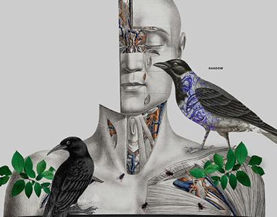 Collage - Corvus