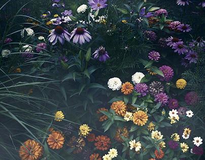 Botanica Notturna