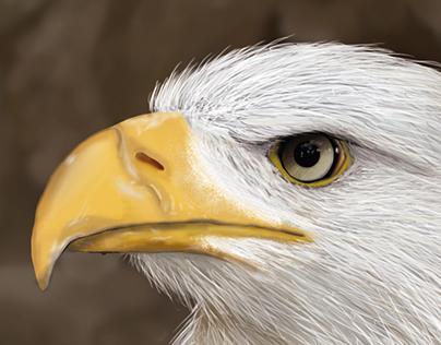 Pintura Digital - Águila