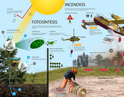 Forest Infographic