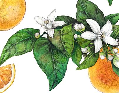Orange tree, orange fruit and orange flowers - Patterns