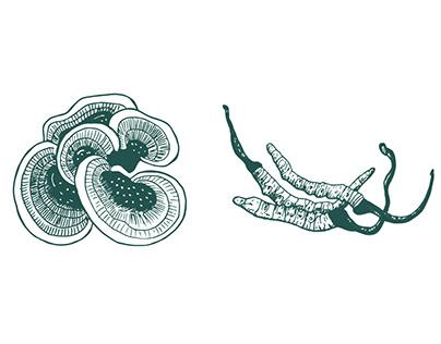 Mushroom Illustrations Packaging
