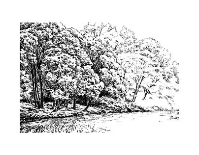Botanical garden #9, 11, 12
