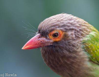 Okhla Bird Sanctuary - Feb 2021