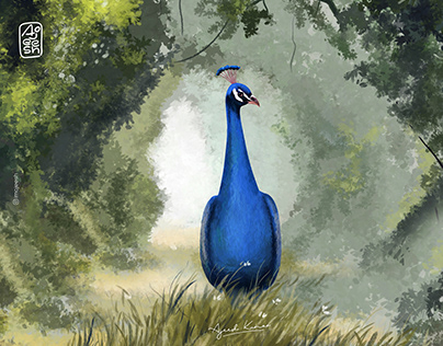 Lonely peacock  |  Digital Painting