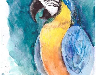 Яркий попугай АРА