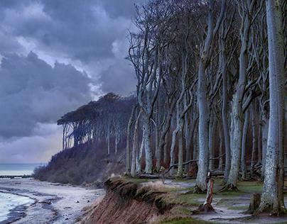 Ghost Forest Nienhagen