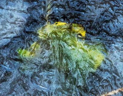 foglie in trappola
