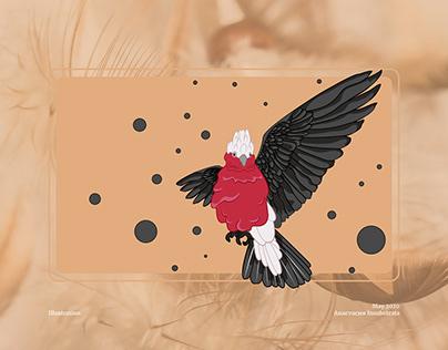 Parrot birds for vector illustration
