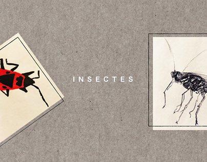 Etude insectes