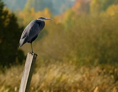 Wildlife and Birds