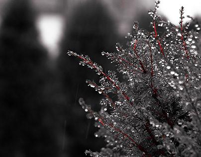 Rain diamonds
