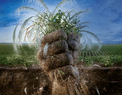 Campanha - Combate às plantas daninhas!