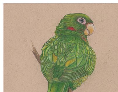 Birds Endemic to Cuba