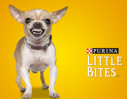 Chihuahua - Purina Dog Chow Little bites
