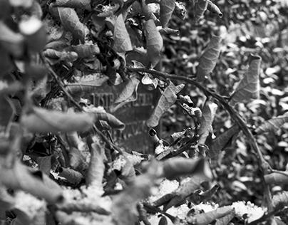Snow Day I