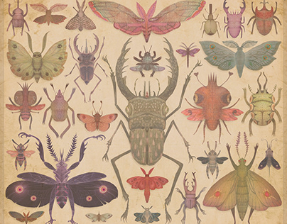 ENTOMOLOGY Vol. I