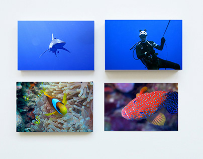 Underwater Photography // mix