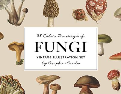 Fungi – Vintage Illustrations