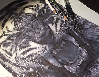 Pencil & Pen Tiger Study - by Julio Lucas